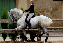 Andalusian / Lusitano Beauties