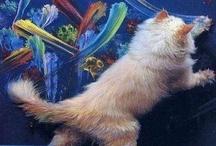 Macska Képek