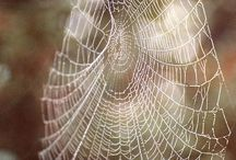 Charlotte's Web / All that I hope to say in books, all that I ever hope to say, is that I love the world. -  E.B. White / by Jacqueline Griffin