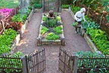 Lovely garden / Liten trädgård