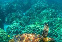 Underwater animals / by Lily Alaniz