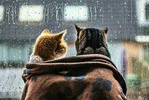 Animais gatos