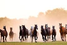 Horses / by Jessica Cornman