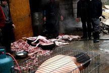 Stop kill animal!!!