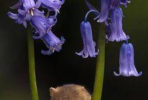 μικρα ζωακια