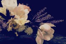 Flowers and Black Background