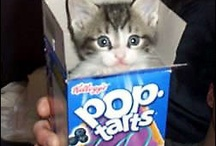 Pop tarts / I like these so much  but not  for sale in  the netherlands