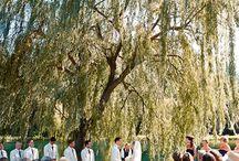 Weddings! / by Felisha Smith