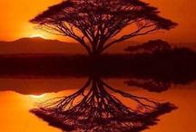 Arbore in Padure