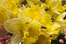 Fleurs de saison : mars