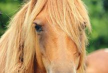 lovacskák / lóóó