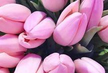 Цветы жизни♥️