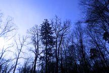 Wald / Wald
