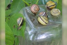 Garden pests- to control organically