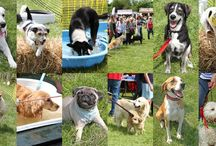 Dogs Trust Fun Days!