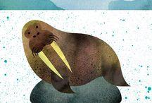 Seals, Walrus & Sea Lions