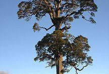 Trees, glorious trees
