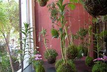 A. KOKEDAMIA / PLANTE
