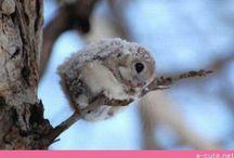 Cutie Patooty! / by Amanda Squires