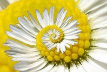 """Espiral / Spiral / """"Un simple acto de caridad crea una espiral sin fin, que vuelve hacia ti."""" - Alberth Lopez"""