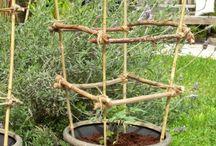 Gardening / Diy gardening projects