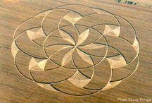 kruhy v obili_tvary