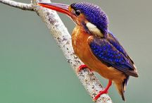 Fugler/birds
