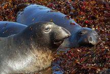 Deep Diving Mammals - Secrets Revealed on How That Do IT / Deep Diving Mammals