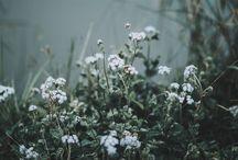 Çiçek♡