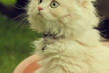 Cats / Prawdziwe koty słyszą otwieranie drzwi lodówki dwa pomieszczenia dalej./Terry Pratchett