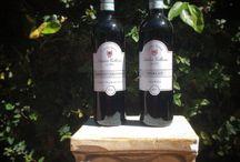Wines of Veneto