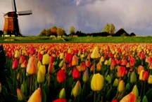 Tulips / by Sandra Zinn