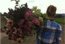 Growers of beauty-meet the flower farmers