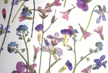 Virágok, flowers, fiori