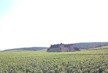 """Wino - Francja - Szampania / Najbardziej wysunięte na północ winnice Francji i Europy, dające wina wiotkie i kwasowe, które są w stanie zaoferować światu tak skomplikowany a zarazem radosny napój, jakim jest szampan. Lokalne winnice, obsadzone są przede wszystkim trzema szczepami. Chardonnay daje tutejszym winom kręgosłup, Pinot Noir i Pinot Meunier – ciało i owocowa nutę.  Gdy już są gotowe, potrafią zawrócić w głowie- bądź milionami żywych bąbelków, bądź czasami ceną… Ale czy jest lepsze antidotum na """"całe zło""""?"""