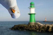 Fotos curiosas de La Mar o/y de los cruceros  / Fotos divertidas sobre el mar, los cruceros, animales