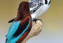Lindas aves