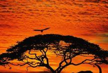 God's art of nature