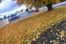 Fall North Idaho