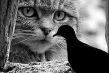 Gatti i miei amori.....