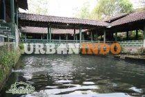 Usaha Rumah Makan dan Kolam Renang di Yogyakarta