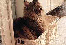 Cats, owls, ...