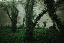 Nature reclaiming, nature overgrown