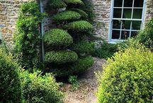 topiary, pleaching, etc