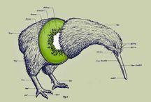 Kiwi stuff
