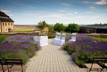 Vendulavirág Weddings / Vendulavirág Esküvőszervezés-Virágkötészet és dekoráció