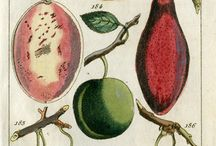 Antique and Botanical Prints