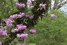 orchids in native