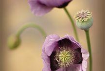 çiçek detay