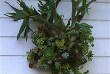 Stag horn ferns and succulents